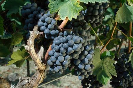 Vineyards for sale in Europe. Vineyard – Bar, Montenegro