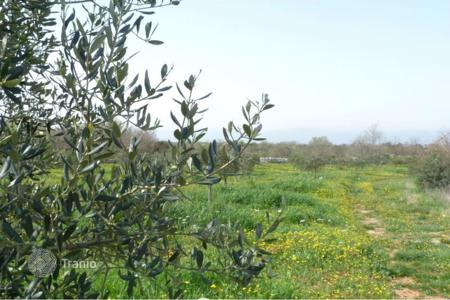 Coastal land for sale in Croatia. Beautiful olive grove with sea view, housing and economic purpose