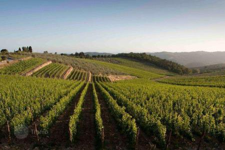 Coastal vineyards for sale in Italy. Vineyard – Friuli-Venezia Giulia, Italy