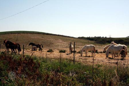 Agricultural land for sale in Europe. Agricultural – Moura, Beja, Portugal