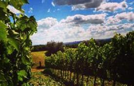 Property for sale in Tuscany. Large vineyard and olive grove in Valdichiana, Tuscany, Italy