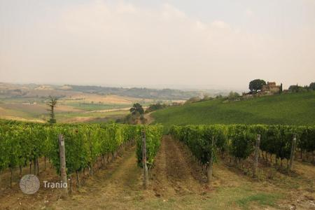 Land for sale in Tuscany. Vineyard - Castagneto Carducci, Tuscany, Italy