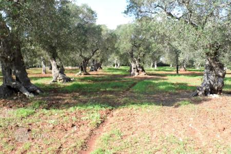 Property for sale in Apulia. Sale land with olive trees building of 17,860 square meters to 800 meters from the sea