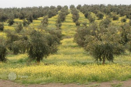 Land for sale in Portalegre District. Land with olive plantations in Alentejo, Portugal