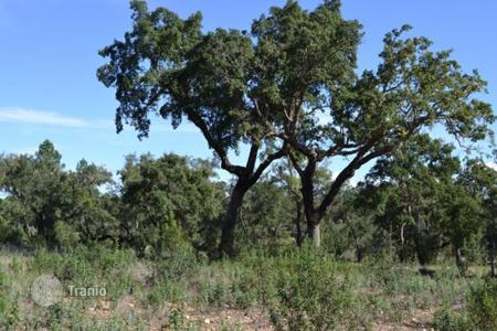 Bank repossessions property in Evora. Plot with olive plantation in Evora, Portugal
