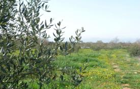 Land for sale in Croatia. Beautiful olive grove with sea view, housing and economic purpose